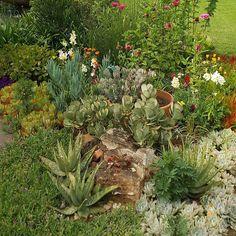Summer in my garden #waterwisegardening by cecilyannwestray #waterwise #waterwisegardening #drought #droughttolerant