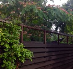 Cat proof fence. Keeps our cats save inside the garden!