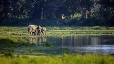 Elephants in the sunset by Vishwa Kiran on 500px