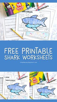 3 Free Printable Shark Worksheets To Teach Kids