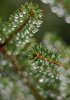 Color pallet palette inspiration pine needles winter snow dew   green white brown water