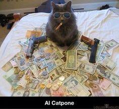 Al Catpone #alcapone #lolcats #cats #animals #funny
