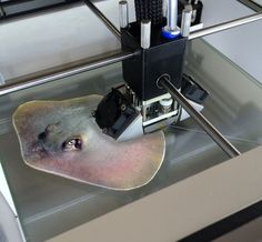 Who thought a Rat, some Gold and Silicone could turn into a tiny stingray?As odd as it sounds, a team of scientists have recently conducted a research project, where they used3D printing and genetic engineering to create a biohybrid animal.This tiny swimmer moves by using the mesh rat heart muscle cells inside its silicone body Maybe something for 3D Printer Chat?