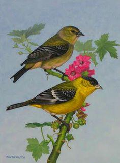Paisajes y Bodegones: Oleos de pajaros Audubon Birds, Bird Wings, Bird Illustration, Bird Pictures, Vintage Birds, Botanical Art, Bird Art, Animal Drawings, Beautiful Birds
