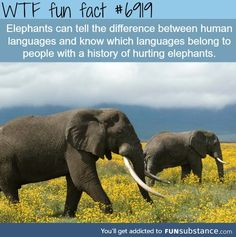WTF Fun Facts is updated daily with interesting & funny random facts. We post about health, celebs/people, places, animals, history information and much more. New facts all day - every day! Elephant Facts, Elephant Love, Elephant Stuff, Wtf Fun Facts, Funny Facts, Random Facts, Strange Facts, Funny Animals, Cute Animals