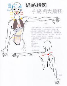 手陽明大腸経--Large intestine meridian, Acupuncture points-