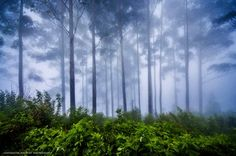 Cloudy forest  Photo by Udayaditya Kashyap -- National Geographic Your Shot