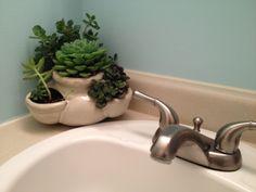 Bathroom succulents