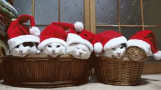 These #cats are definitely ready for santa!