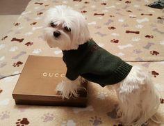 #kaikarrington #guccidog