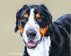 British artist, Justine Osborne - portrait painting of a swiss mountain dog