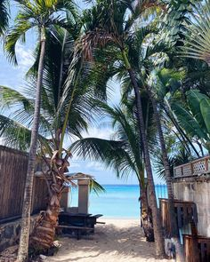 "Ellie E   CITYCATWALK på Instagram: ""Road to paradise! Barbados Barbados, Caribbean, Paradise, Plants, Instagram, Plant, Planets, Heaven"