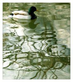 Canard au Domaine de Maizerets Nature, Fish, Pets, Painting, Animals, Landscapes, Animals And Pets, Animales, Animaux