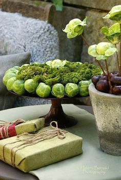 Brussel sprouts & moss... beautiful! Who would have thought ha?! mtdb