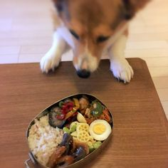 Japan大阪 BENTO it's not for you あんたのちゃうで #台灣#台湾#便當#bento #お弁当#日本#大阪 #吃#好吃#午餐 #昼ごはん #ランチ #taiwan#Japan#Osaka#lunchbox #yummy #コーギー #dog #corgi #柯基 #ilovetaiwan #ilovejapan #ilovecorgi by taiwan_osaka