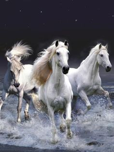 White Horses Coming Out Of The Surf