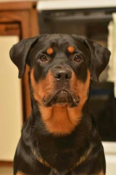 Rottweiler,   i have a female, Princess is her name .   love her to pieces!!
