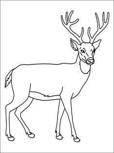 DeerColoring  Deer coloring pages that make your Day  Dead Room