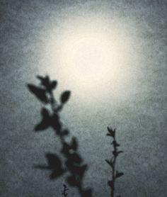 Elijah Gowin - Into the Sun