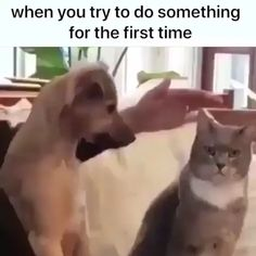 memes crush Cats are cute and sometimes unintentionally do stupid funny things, so we have collected some the funniest and most hilarious cat memes and pictures hope you will enjoy em. Funny Animal Memes, Dog Memes, Funny Animal Videos, Cute Funny Animals, Funny Cute, Funny Dogs, Cute Dogs, Hilarious, Stupid Funny