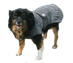 Designer Italian Greyhound Coat with collar made made just for your dog - pinned by pin4etsy.com