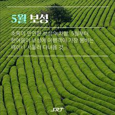 rxKAJ Travel Tours, Travel Information, Movies, Movie Posters, Life, Korean, Films, Korean Language, Film Poster