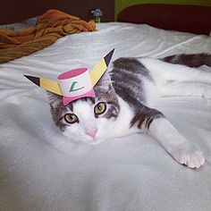 Tiny hats on cats. Pika cat!