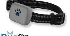 Does your pet need a GPS tracker? Pet trackers are becoming more and more popular these days, but are they worth it?