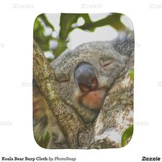 Koala Bear Burp Cloth