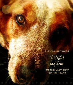 He will be yours, faithful and true, to the last beat of his heart. (Unknown)  Art by PixelGraphix, with a special thanks to the pooch, Pilot, for being such a great model. :)