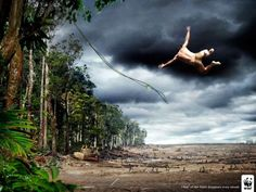 Tagline 15km Of Rain Forest Disappears Every Minute World
