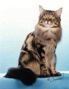 pentecostal kitty