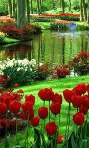 green and water beaneath the trees. Daffodils and tulips carpet Chrysanthemu Red green and water beaneath the trees. Daffodils and tulips carpet Chrysanthemu. -Red green and water beaneath the trees. Daffodils and tulips carpet Chrysanthemu. Beautiful World, Beautiful Gardens, Beautiful Flowers, Beautiful Places, Beautiful Pictures, Beautiful Scenery, Simply Beautiful, Amazing Places, Beautiful Nature Wallpaper