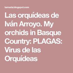 Las orquídeas de Iván Arroyo. My orchids in Basque Country: PLAGAS: Virus de las Orquídeas