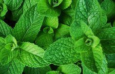 7 plantas que vão afastar os insetos (principalmente mosquitos!) da sua casa! | Casa&Cozinha
