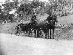 A cab in early Hobart. Tasmania, Family History, Past, Moose Art, Australia, Horses, Apple, Places, Animals