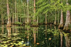 America's first national preserve, the Big Thicket represents a wealth of biological diversity.