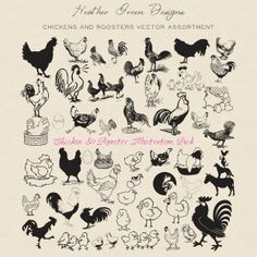 Chicken and Rooster Vector Pack Rooster Vector, Black Rooster, Chickens And Roosters, Web Design, Graphic Design, Heather Green, Chickens Backyard, Best Graphics, Diy Party