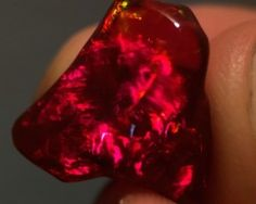 Mexican Fire Opal Stones 15 x 14.3 x 10.35mm 9.765 carats Auction #510948 Opal Auctions