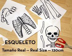 Esqueleto tamaño real, imprimible gratis para hacer actividades educativas relacionadas con el cuerpo humano