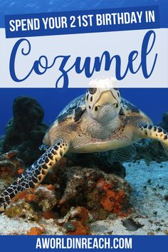 Turning 21 soon? Consider celebrating your big day in Cozumel, Mexico, one of the best places to go for your 21st birthday! / 21st birthday in Cozumel / things to do in Cozumel / where to go for your first legal drink / cool places to celebrate your 21st birthday / take a trip for your 21st birthday / 21st birthday destinations / where to celebrate your 21st birthday in Mexico / unique places to celebrate your 21st birthday / visit Cozumel Mexico travel tips #Cozumel #Mexico Honduras, Costa Rica, Places To Travel, Travel Destinations, Cozumel Mexico, Visit Mexico, Central America, North America, Mexico Travel