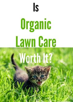 Is Organic Lawn Care Worth It? Over the years, I've become a believer in organic lawn care because I see the beautiful result and I can have peace of mind that dangerous chemicals won't hurt my family or the environment.