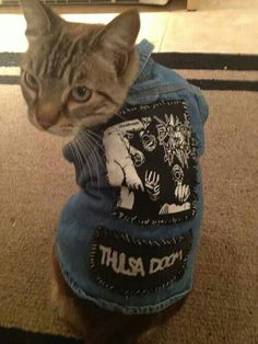 Adorable crust punk kitty :3
