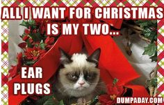 grumpy cat, all i want for christmas is my two front teeth