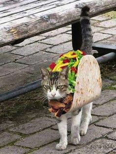 A Taco | 26 Things Cats Are Not