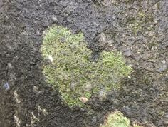 A moss heart on our hiking trail in NC. Spencer took the picture. ❤️