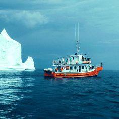 Twillingate Boat Tours   Iceberg Quest Ocean Tours