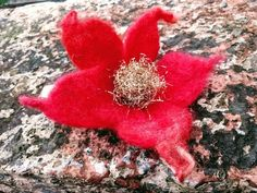 Hair pin or Perfect for party. Hand made with merino and recycling Gold ribbons. Perfect gift, nice wraping with old wax. Ready to go ***available romantic box for valentines day Love Valentines, Valentine Gifts, Poinsettia, Gold Ribbons, Vintage Gifts, Flora, Maya, Recycling, Felt
