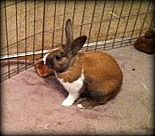 Johnny #bunny #rabbit #rescue