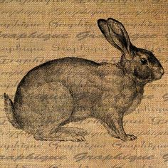 Rabbit Farm Animal Series Rabbits Cottontail Bunny by Graphique, $1.00